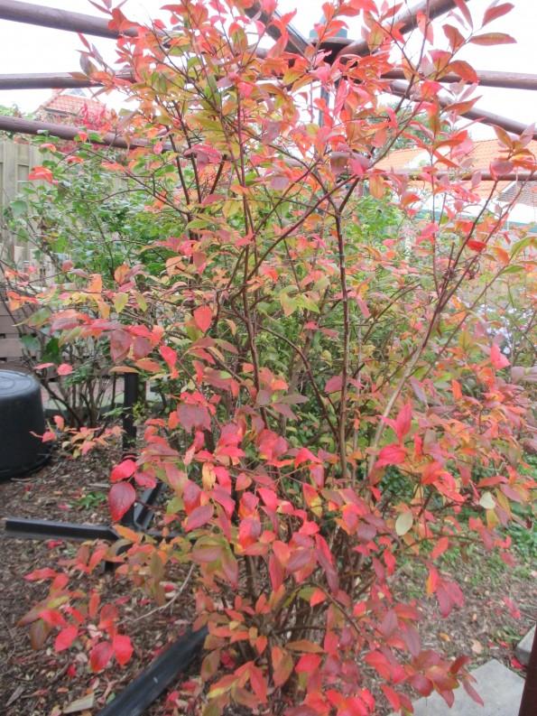 Herbstbilder 004